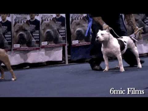 Atlanta Bully Palooza 4 3.27.2010 - ATLANTA GA Dog Show - 6mic Films