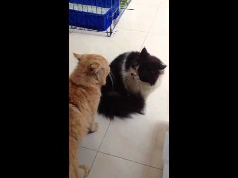 Mother Cat Gets Angry At Her Kittens