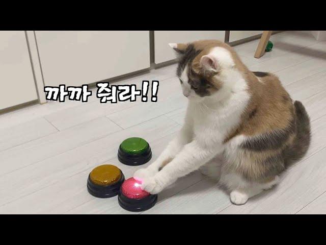 고양이 최초로(?) 단어를 조합하기 시작했어요ㅣ녹음부저벨로 대화하는 고양이 ㅣ똑똑한 고양이