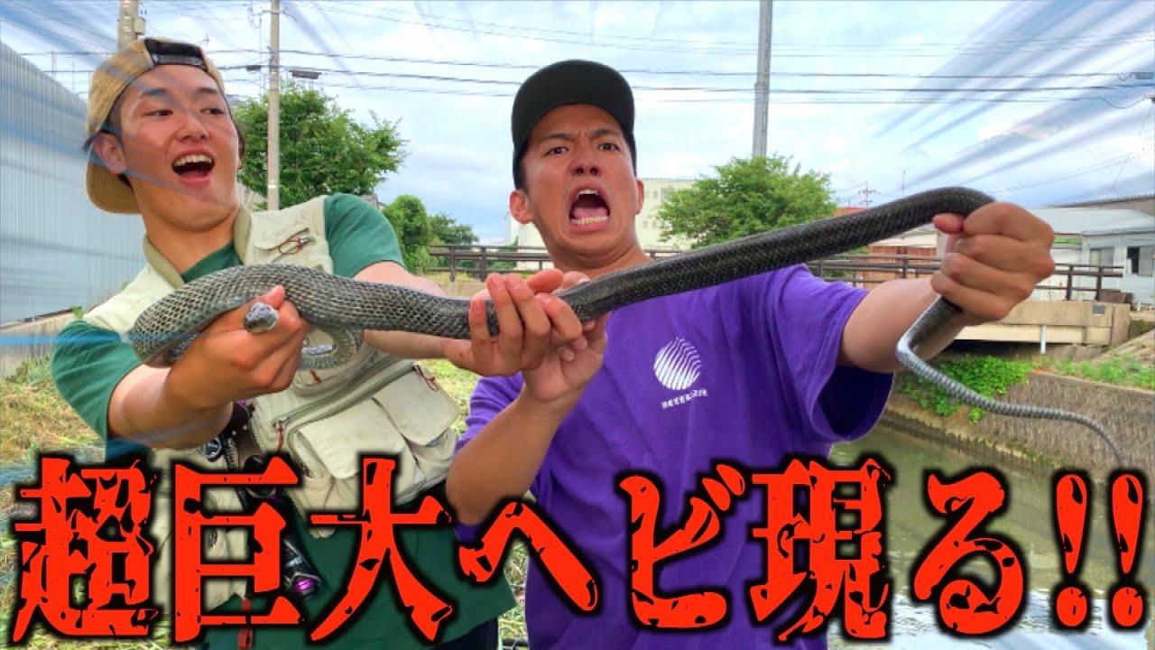 3メートル級の大蛇を捕獲したら…