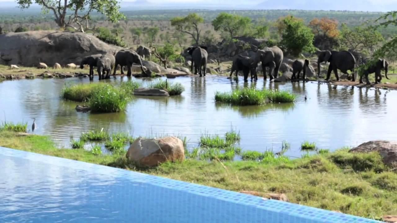 Four Seasons Safari Lodge Wildlife In The Serengeti Youtube