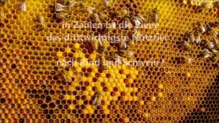 Repeat youtube video Stoppt das Bienensterben - More than Honey - AUFRUF - 2013