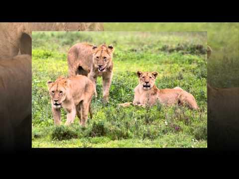 Jeff Cable - Tanzania Safari 2016