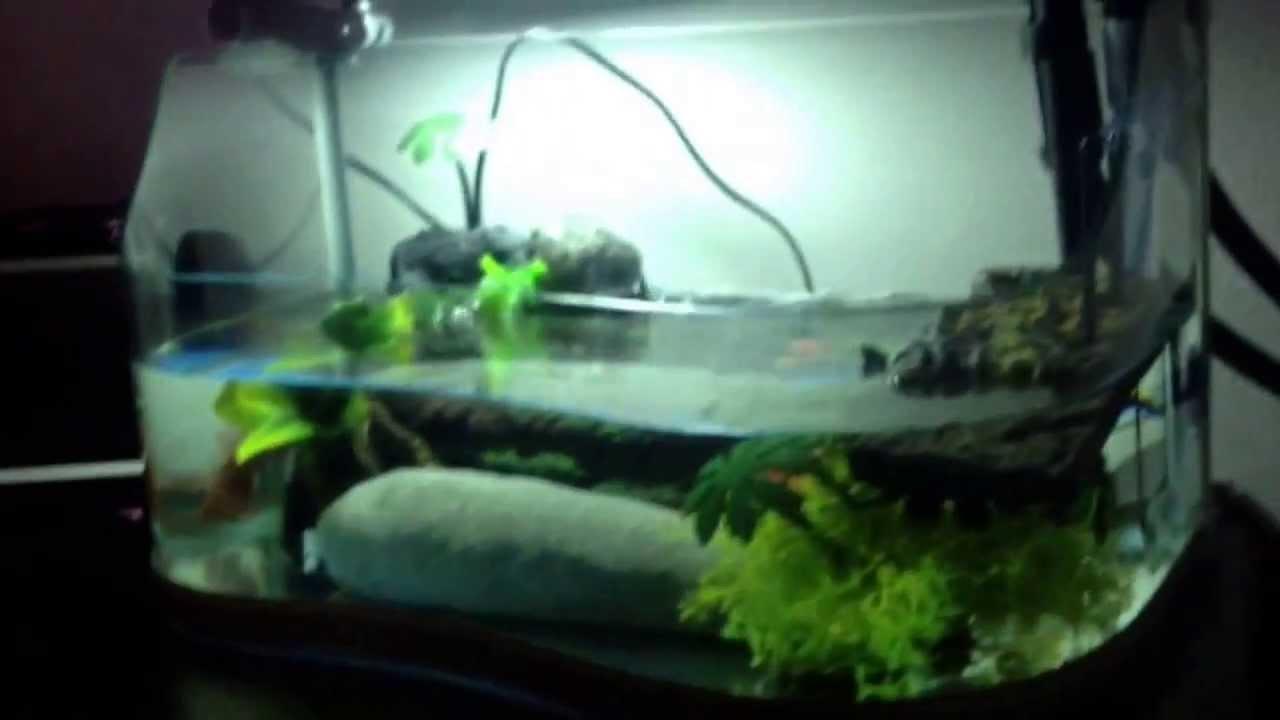 rumore filtro acquario tartarughe youtube