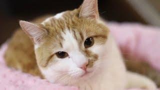 Кот Бегемот и другая кОтовасия: как в России отмечают День кошки