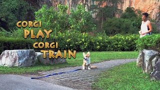CorgiDuties Ep3 Join Casper as he goes to the dog cafe for his very...
