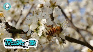 """Breves: """"Cuidar a las abejas"""""""