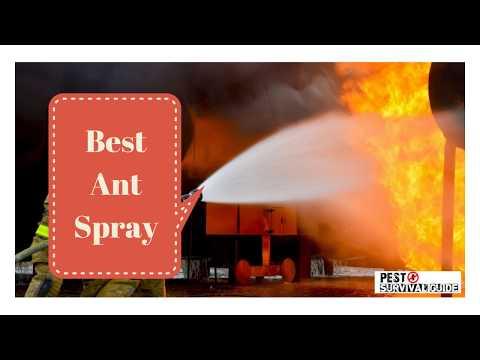 Best Ant Spray