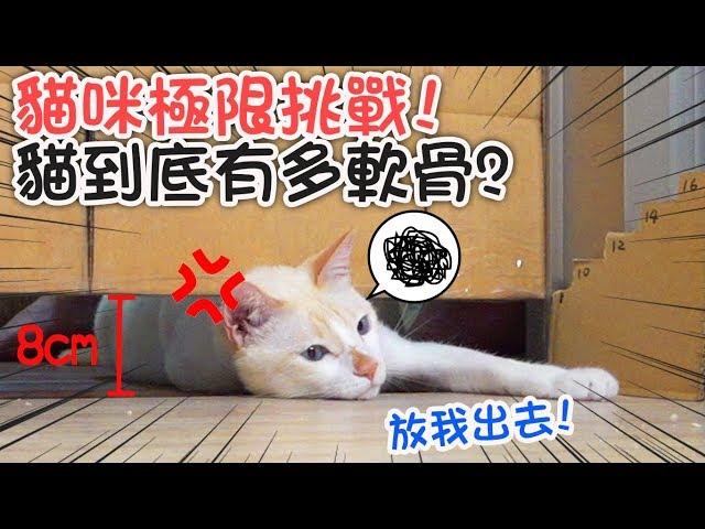 【日常】貓咪極限挑戰,實測貓咪到底能鑽多窄的縫?[NyoNyoTV妞妞TV玩具]