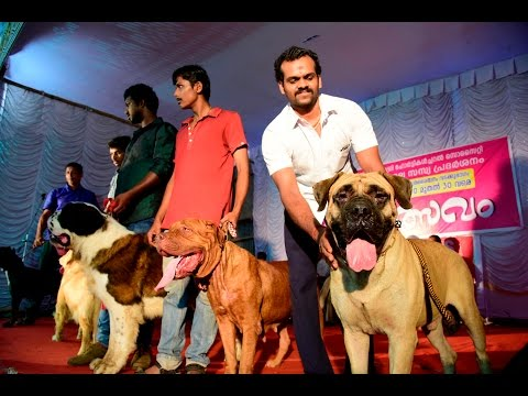 Dog Show 2017 At Flower Show Thrissur