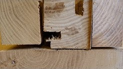Holzbestimmung: Eiche, Esche, Rüster oder Robinie