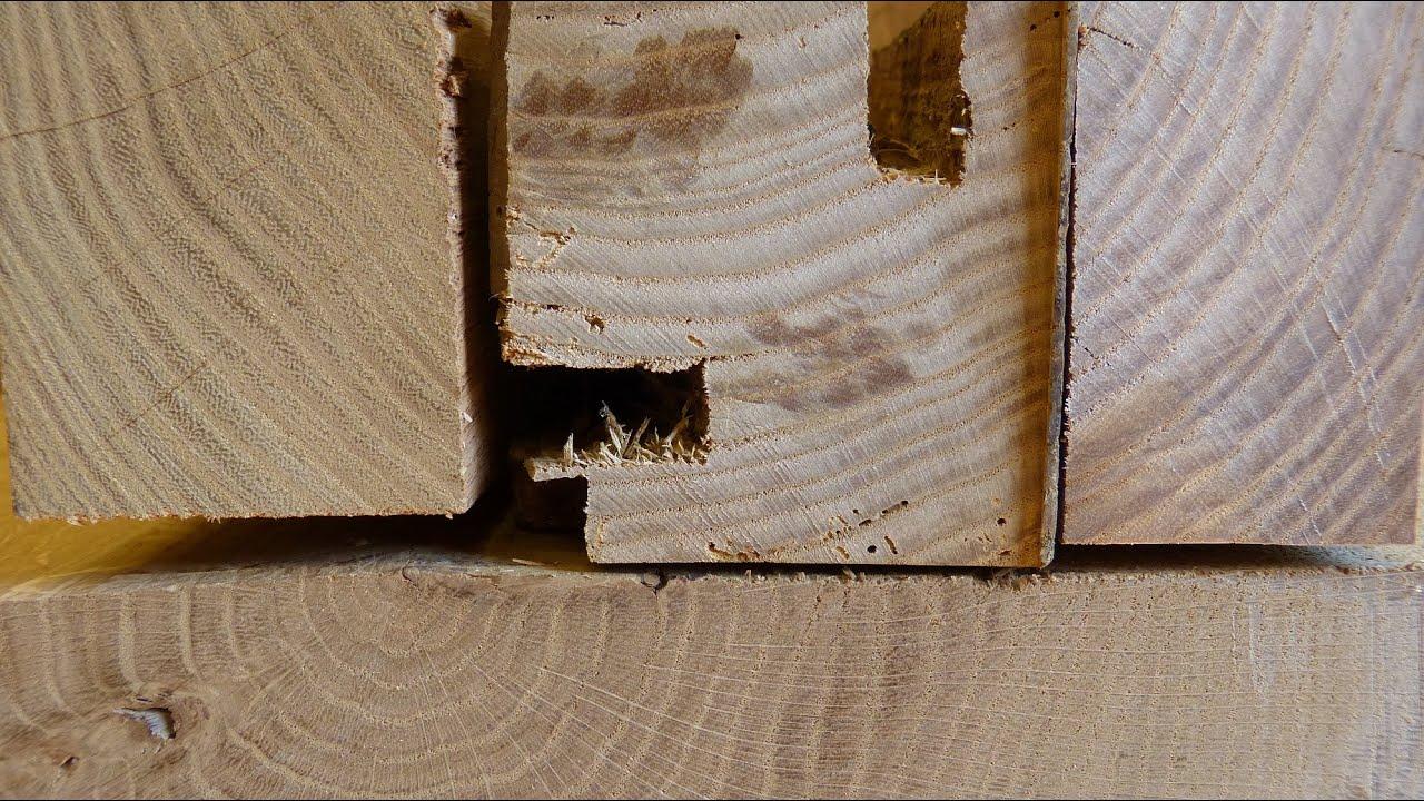 Holzbestimmung Eiche Esche Rüster Oder Robinie Youtube