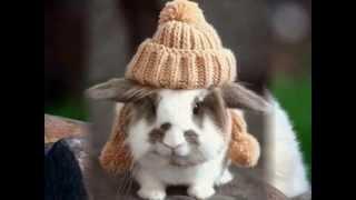 картинки кроликов