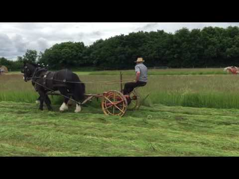 Traditional grass mowing at Teagasc's Farming and Country Life 1916 event