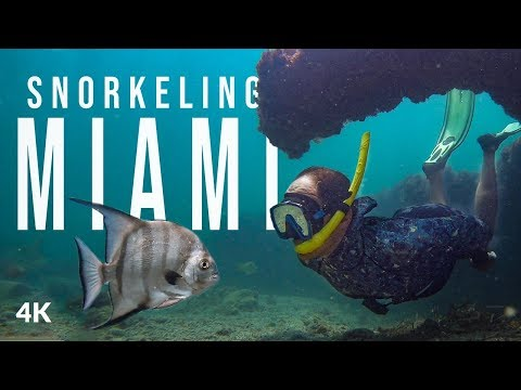 Snorkeling In Biscayne National Park Miami - Secret Location Discovered