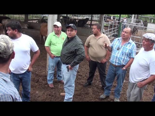 Con apoyo de Israel fortalecen conocimientos técnicos en nutrición y alimentación del ganado bovino