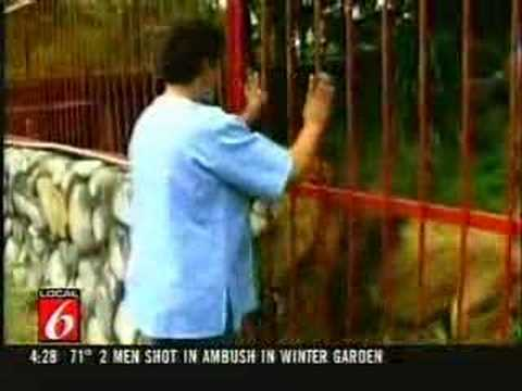 Lion shows owner some love