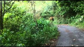 Gavi Kerala, Elephants attack on our car by Vaishanav sajith