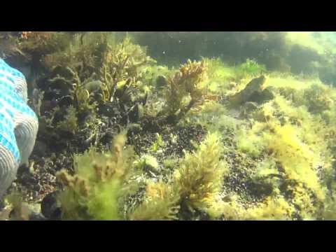 Необитаемый остров Суджук. Морское приключение в июле 2017. Черное море. Новороссийск