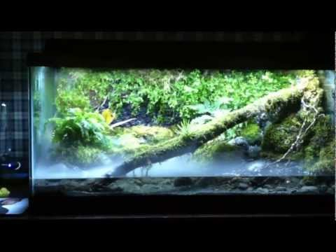 Vivarium frog tank. View at your own risk.