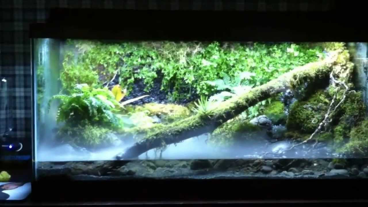 Vivarium Frog Tank View At Your Own Risk Youtube