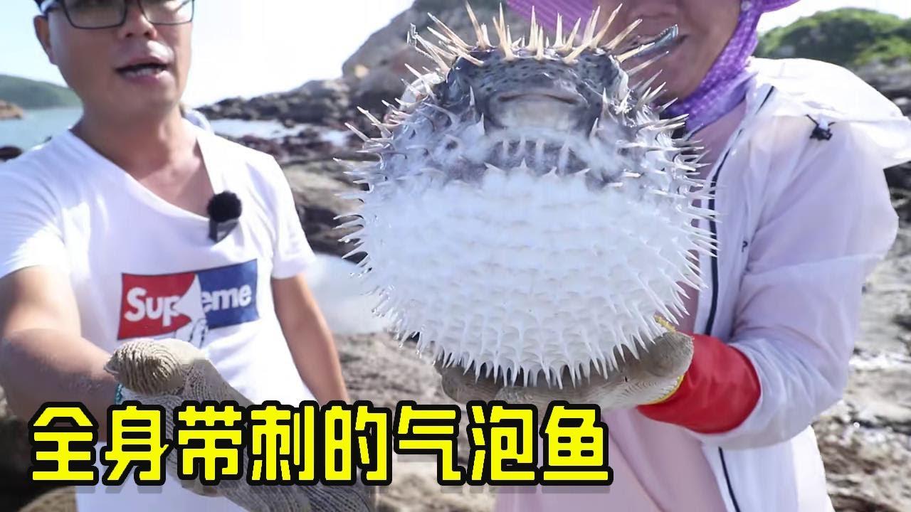 小漁趕海大豐收,帶刺氣泡魚一隻就爆桶,帶子,響螺,螃蟹隨便撿【漁小仙】