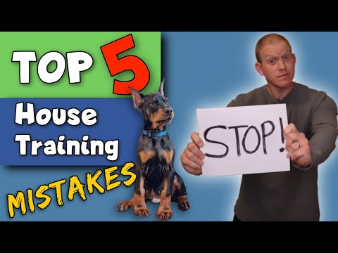 STOP Making These Potty Training Mistakes! Doberman Puppy Training