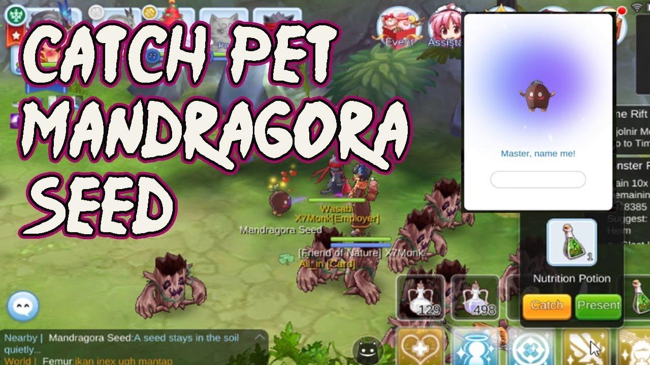Catch Pet Mandragora Seed Ragnarok M Eternal Love How To Youtube