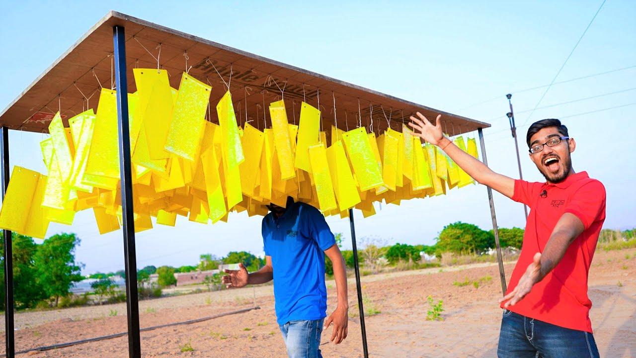 200 Fly Glue Traps VS Human   क्या ये हमे चिपका देंगे?
