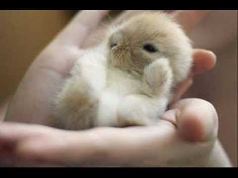 try not to say awww