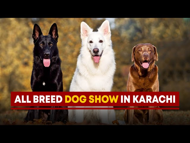 All Breed Dog Show In Karachi
