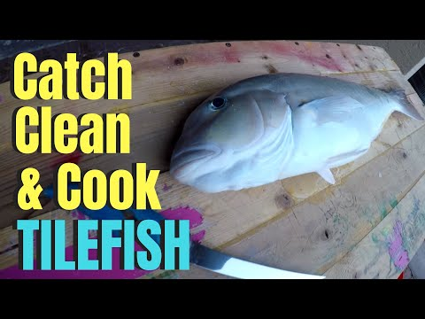 TILEFISH Catch Clean Cook