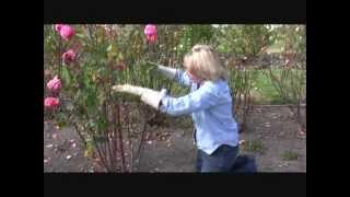 Pruning Roses for Maximum Display