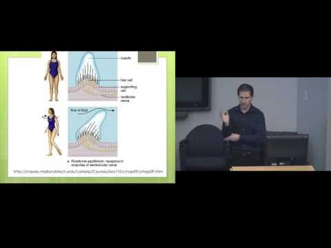 """SFU Biomedical, Physiology and Kinesiology Weekly Seminar Series """"Vestibular Therapy"""""""