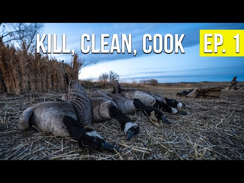 HUNTING CANADA GEESE | Montana Goose - Kill, Clean, Cook (Ep. 1)