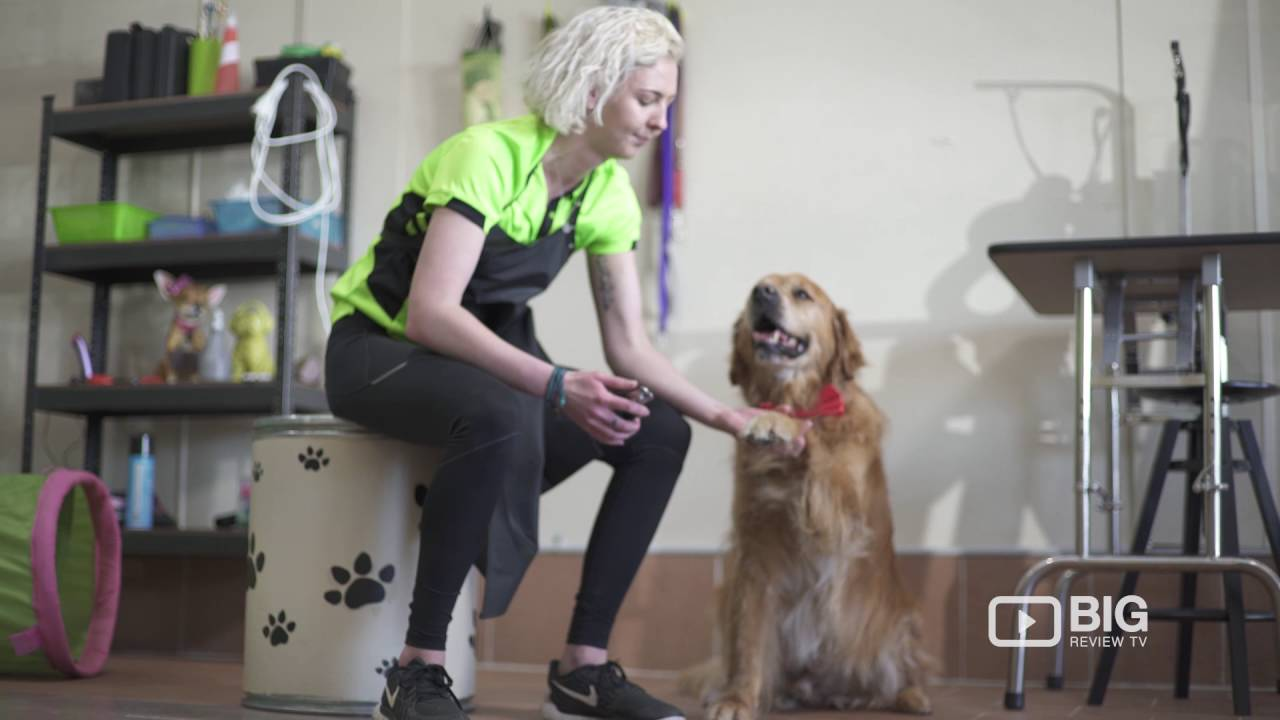 Drools grooming a pet groomer in sydney offering pet care and dog drools grooming a pet groomer in sydney offering pet care and dog grooming solutioingenieria Choice Image