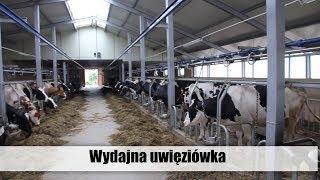 Wydajna uwięziówka - obora Roberta Saniewskiego - top agrar Polska