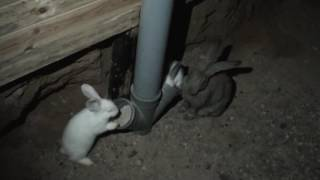 Большая яма для кроликов (ч.3 первый окрол)