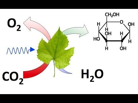 CO2 o Dióxido de Carbono. Conceptos y Experimentos Básicos.