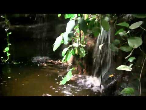 Esmerine - La Lechuza - Little Streams Make Big Rivers [HD Video]