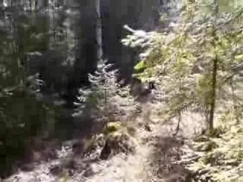 Поход в логово волков