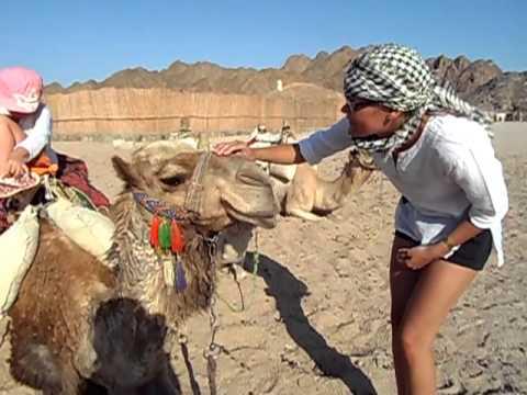 Как орет верблюд