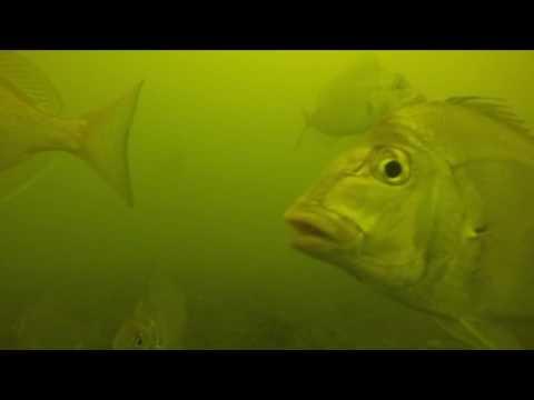 Long Island Sound Underwater GoPro