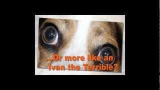 Chilliwack Dog Training |  604-556-9966 |  Hope Bc |  Chilliwack Dog Obedience Class
