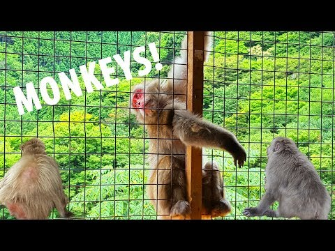 Thumbnail: Solo Japan Trip! Day 7 - Bamboo forest and MONKEYS!!
