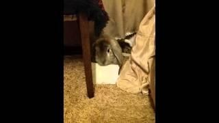 Кролик жрет обои