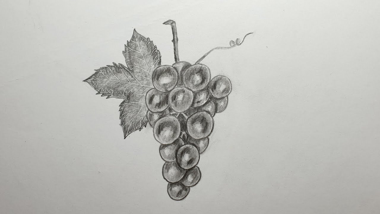 How to draw grapes for Beginners