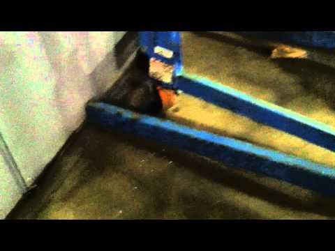 BID ON EQUIPMENT: Listing 141156 - GENIE AWP-36 w. Straddle Lift