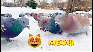 Hypnotizing Video For Pets! Hungry Big City birds for pets!