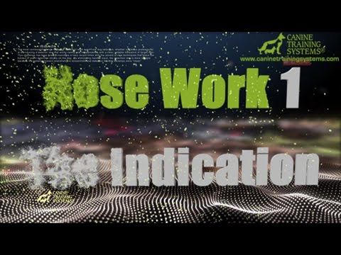 Training Through Pictures with Dave Kroyer- Nose Work 1 - The Indication